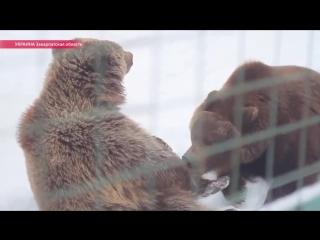 Помните видео, где в России медведя давят грузовиком? Теперь гляньте, какое отношение к медведям в соседней Украине