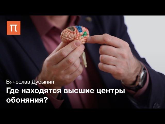 Кора больших полушарий — Вячеслав Дубынин » Freewka.com - Смотреть онлайн в хорощем качестве