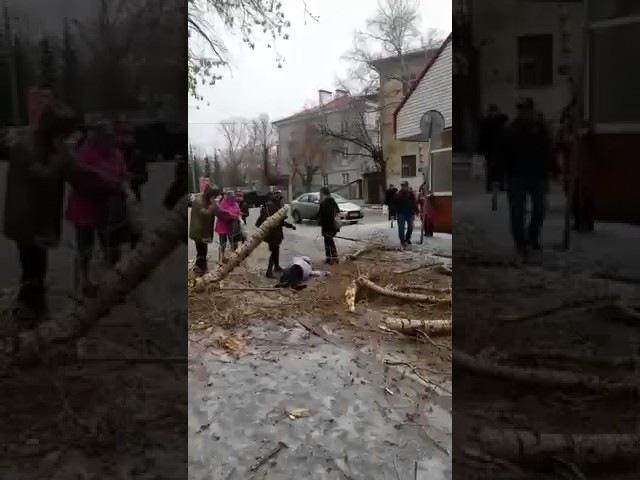 В Казани упало дерево на человека 20 04 2017