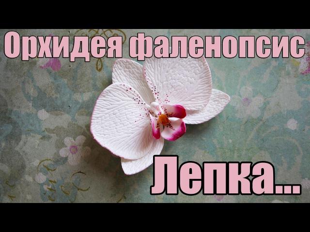 Орхидея фаленопсис. Лепка. Полимерная глина. Polymer clay.Orchid.