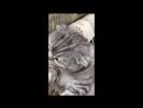 Кот обормот by ph1p5