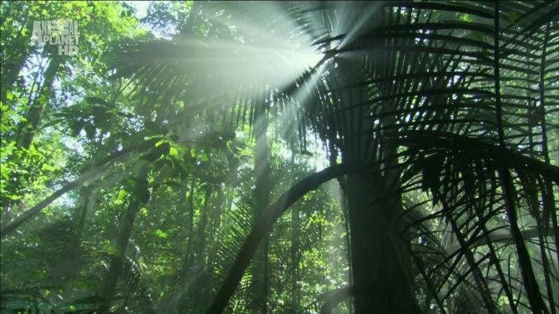 «В дебрях Латинской Америки (1). Амазонка: Один лес, много миров» (Документальный, животные, 2012)