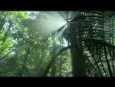 В дебрях Латинской Америки 1 Амазонка Один лес много миров Документальный животные 2012