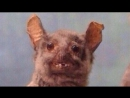 BLOKADA Mini Frag Movie by Vityaz YouTube