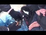 Задержание организатора теракта в Петербурге. (03.04.2017) Срочная новость!