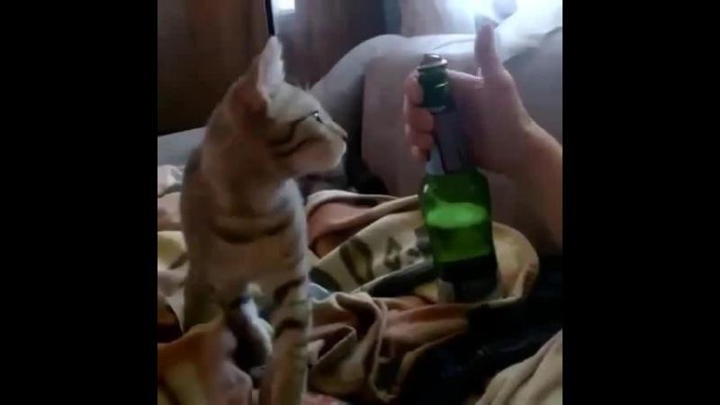 Был бы у меня такой кот
