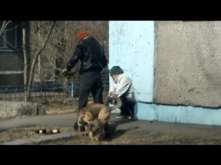 Как правильно выгуливать домашних животных