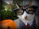 Katzen lustige Kostüme