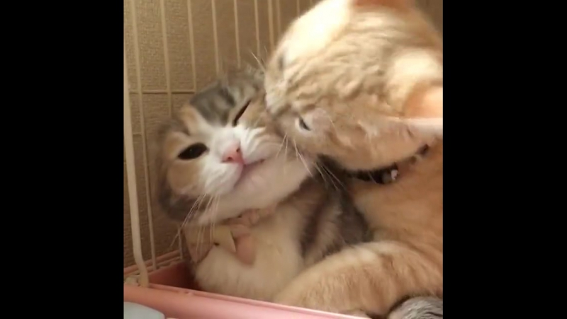 Vitamin.Z (Такие милые кошки)