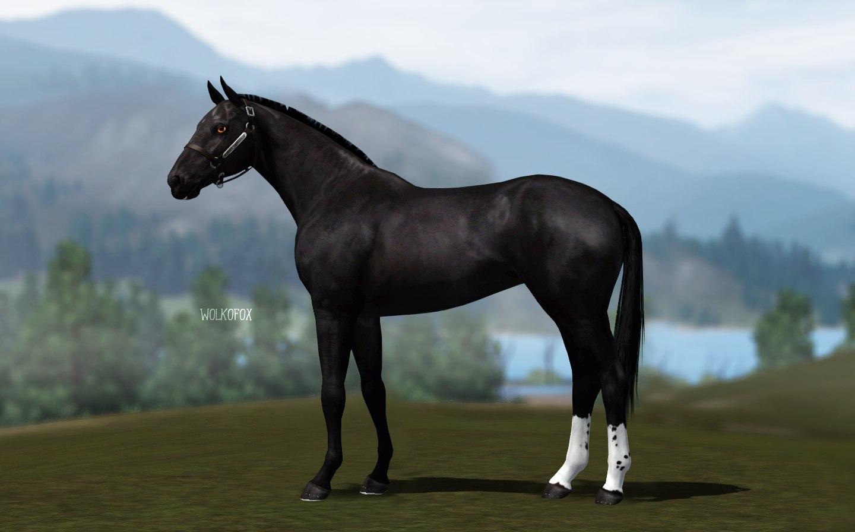Регистрация лошадей в RHF 2 - Страница 4 BGUqh26Zke8