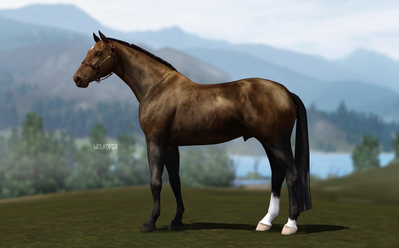 Регистрация лошадей в RHF 2 - Страница 4 GYfrREP_Orw