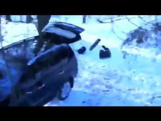 Как медведь угнал машину :D