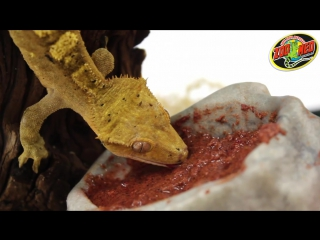Zoo Med Crested Gecko Food