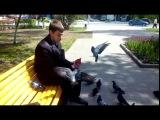 Наглые калужские голуби. В сквере Жукова есть семки нельзя.