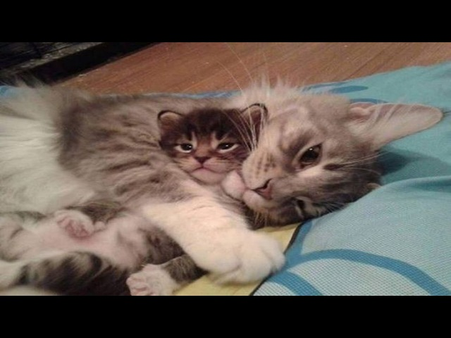 Kittens Talking and Playing with their Moms Compilation | Cat mom hugs baby kitten