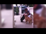 пример реакции собак на свою хозяйку