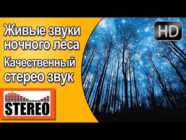 Релакс: звуки ночного леса, крики совы, цикады слушать онлайн