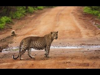 Национальный парк Яла Шри-Ланка / Yala National Park Sri Lanka 4k Ultra HD