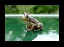 песня - Три Желания лягушка
