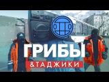 Таджики перепели Тает Лёд