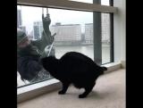 Перед котиками никто не устоит