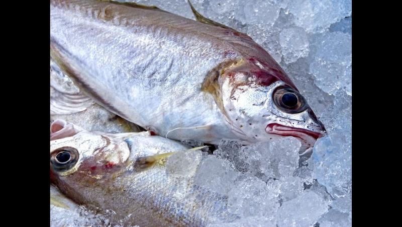 Свежемороженая рыба от Капитана