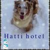 Зоогостиница (передержка) для собак Hatti Hotel