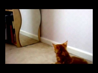 Смешные видео про кошек|Приколы с животными 2016|Ржака до слёз на YouTube