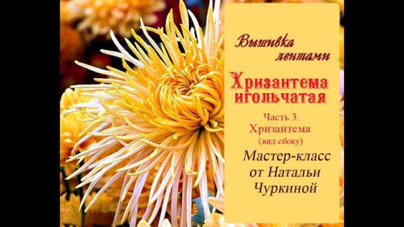Мастер класс Хризантема игольчатая от Натальи Чуркиной Часть 3 Хризантема вид сбоку