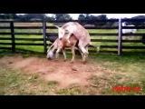 СЕКС 1Mule Horse  Amazing Horse Making Love
