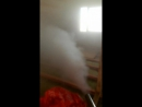 Обработка от короеда горячим туманом!