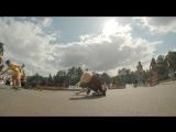 Музыка из рекламы Pedigree - Фильм о любви, снятый собаками (Россия) (2017)