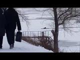 Житель Энгельса спас трех провалившихся под лед собак