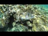 Reef oasis Egypt