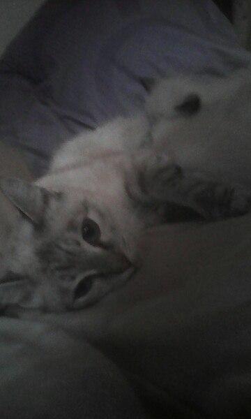 Продал осталось 2 кошки 2 кота