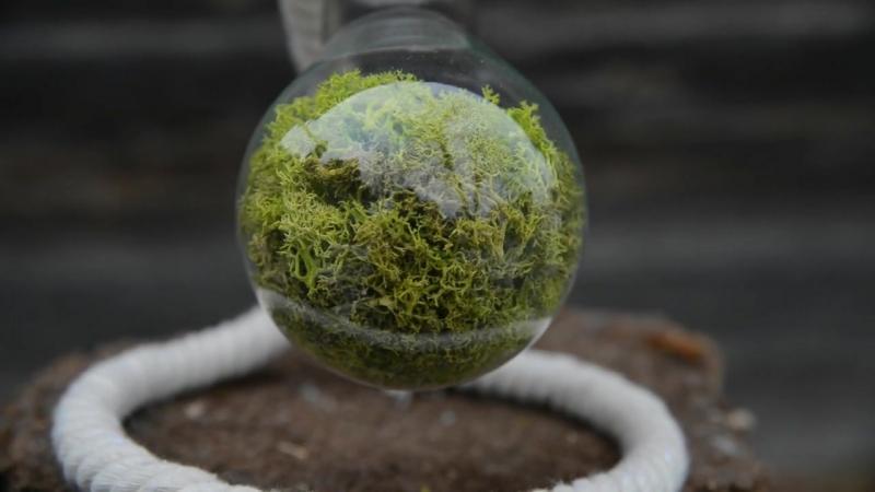 Флорариум в Лампочке 500 мл, белая - Новый тренд в мире подарков