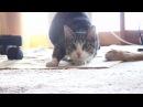 Двигай телом cat moves body twerk trap