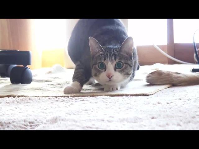Двигай телом - cat moves body twerk trap · coub, коуб