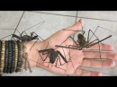 Spiders on my Arm