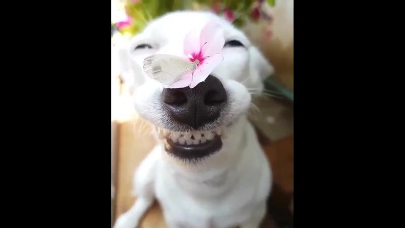 От улыбки хмурый день светлей