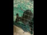 лера зоопарк4