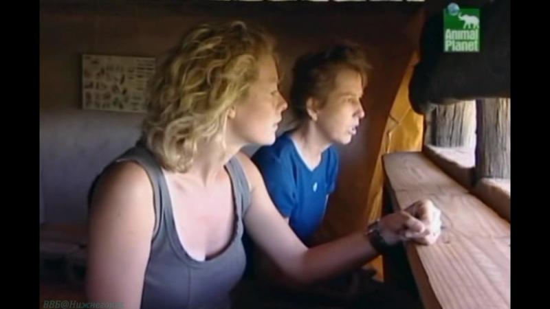 BBC «Заповедник в дебрях Африки» (09 серия) (Реальное ТВ, животные, 2005)
