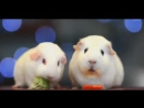 Guinea Pig Has an Existential Crisis   Simon and Garfunkel - The Sounds of Silence