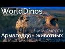 Армагеддон животных Лучи смерти 1 серия