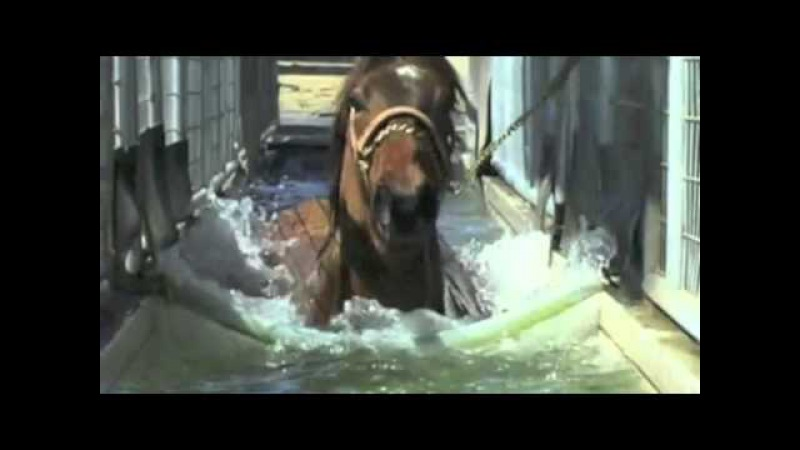 NZ Racehorse Farm Overview