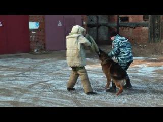 Собаки на службе закона и порядка