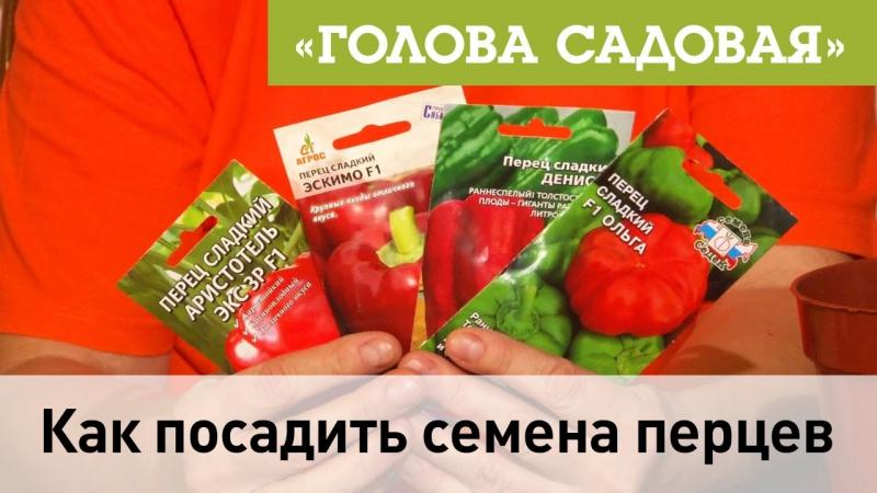 Голова садовая Как посадить семена перцев