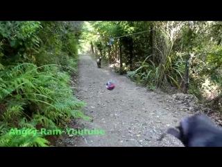 Что будет, повесить мяч на веревке и оставить в лесу