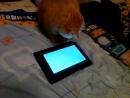 кошка играет на планшете:игры для кошек