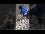 Ловля рыбы на снасть Убийца Карася Вот это Карась.Хочу туда на рыбалку. Рыбак оф...